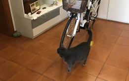 bici rubata a  bologna